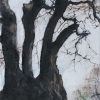 beech-fursdon-drawing-10-09