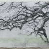 Laurie-Steen_father-oak-fursdon-drawing-20-09.jpeg