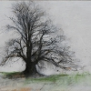 sweet-chestnut-fursdon-draw