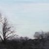 Laurie-Steen_blue-sky-with-tree-landstill-27-11.jpeg