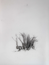 Laurie-Steen_hedge-fragment-drawing-37-11
