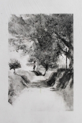 Laurie_Steen_a cathedral of trees, drawing 05-17