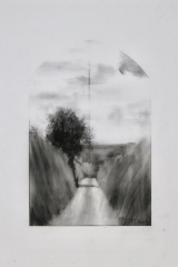 Laurie_Steen_Hedge shadow, Drawing 10-17