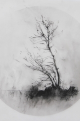 Laurie_Steen_drawing 06-15