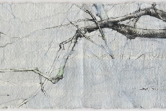 Laurie-Steen_Portrait of a Beech. Drawing 63-09
