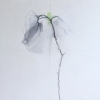 Laurie-Steen_spring sonnet 01-14